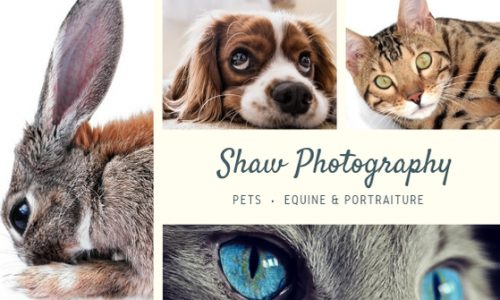 58 Pet Photography Business Name Ideas & How to Create Them